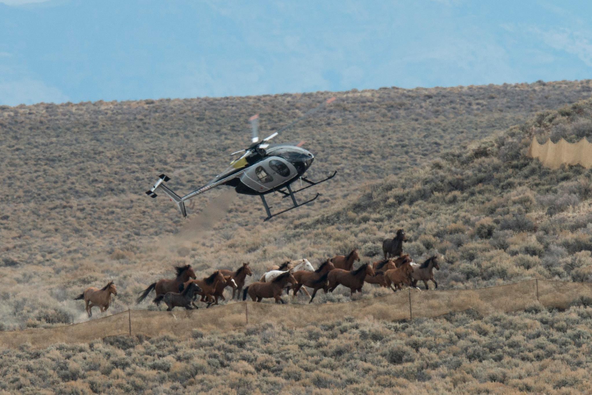 Власти США планируют истребить диких лошадей